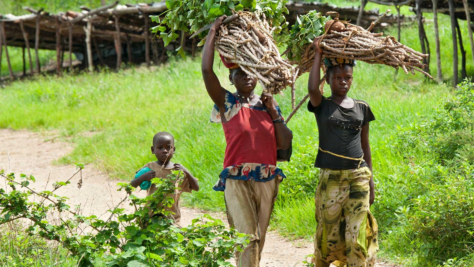 Frauen tragen Holz auf dem Kopf